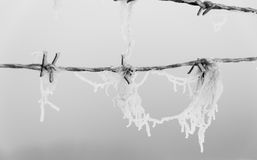 Barbed wire with ice crystals Royalty Free Stock Images