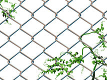 Barbed wire with ivy Stock Image