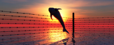 Barbed wire and leaping dolphin for free Royalty Free Stock Photos