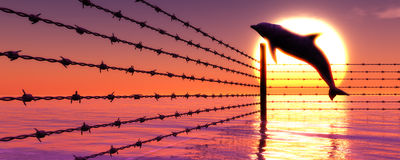 Barbed wire and leaping dolphin for free Stock Image