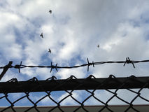 Barbed wire mesh fence against blue sky (selective focus of wire fence) Royalty Free Stock Photo