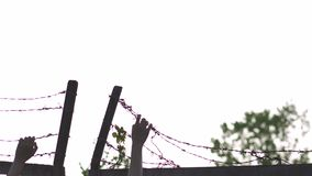 Woman`s hands holding and grabbing - barbed wire metal fence in the evening golden hour sunset - sign of danger cage and. Barbed wire metal fence in the evening stock video footage