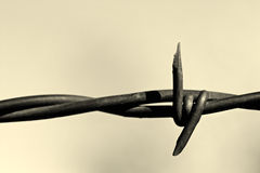 Barbed wire monochrome Royalty Free Stock Photos
