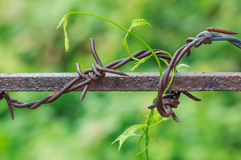 Barbed Wire in Nature Blurred Background Stock Images