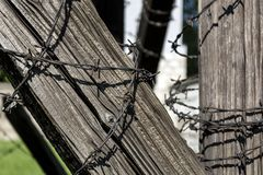 Barbed wire on old wooden beam royalty free stock photography