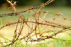 Barbed wire over green grass Royalty Free Stock Image