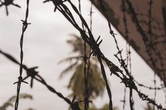 Barbed wire with palm trees in the background stock photography