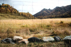 Barbed wire and pasture Royalty Free Stock Images
