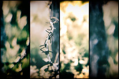 Barbed wire photo Royalty Free Stock Photography