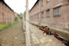 Barbed wire - prison. Picture inside Auschwitz I museum: barbed wire Royalty Free Stock Photography