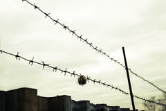 Barbed wire. In the protected area Royalty Free Stock Photos