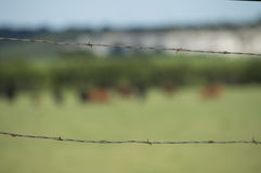 Barbed wire. The rusty barbed wire still serves it's purpose on this rural farm Stock Image
