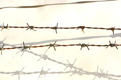 Barbed wire. And shadow on white Stock Images
