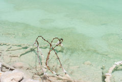 Barbed wire in the shallow waters  Dead Sea Stock Image