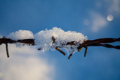 Barbed wire in the snowy meadows Royalty Free Stock Image