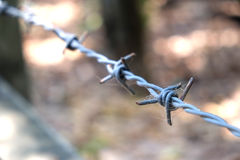 Barbed wire with spider web Royalty Free Stock Photos