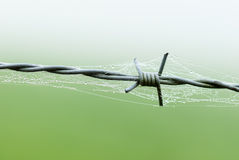 Barbed wire with spider web and drops of water Stock Photo