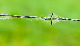 Barbed wire with spider web and drops of water Stock Image