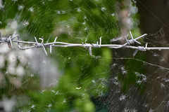 Barbed wire and spiderweb Royalty Free Stock Images