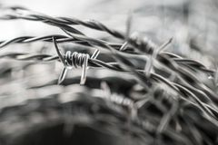 Barbed wire spirals with selective focus. For blur effects royalty free stock photo