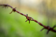 Barbed wire. Suffering pain restrictions army rust wire barbed thorn Royalty Free Stock Photography