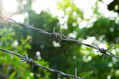 Barbed wire on sunny greenery background. Barbed wire under sunshine. Royalty Free Stock Photo