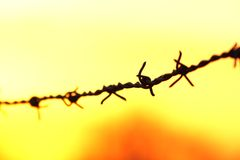 Barbed wire at sunrise Stock Image