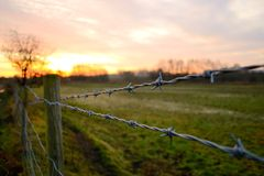 Barbed wire at sunrise Royalty Free Stock Photo