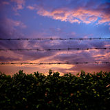 Barbed wire and sunset. Barbed wire above natural fence on sunset royalty free stock photography