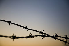 Barbed wire. On a sunset  background Royalty Free Stock Images