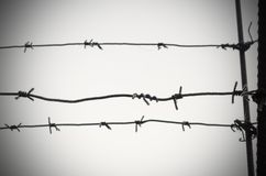 Barbed wire is a symbol of unfreedom, deprivation and concentration camps. Barbed wire is a symbol of unfreedom, deprivation and concentration camps Stock Photo