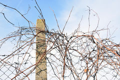 The barbed wire in two rows as protection against unauthorized entry into private territory Royalty Free Stock Photo