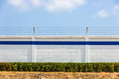 Barbed wire on wall. The barbed wire on wall Stock Photo