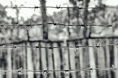 Barbed wire in a web on the background of a wooden fence, black and white photo Royalty Free Stock Photo