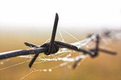 Barbed wire with a wet web Royalty Free Stock Photography