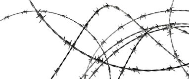 Barbed wire. On white Stock Photos
