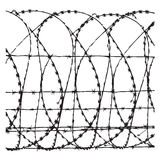 Barbed wire. On a white background Stock Image