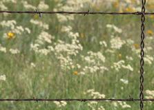 Barbed Wire and Wildflower Border. Close-up of a section of a rusty barbed wire fence with white and yellow wildflower as the background. Can be used as a royalty free stock photo