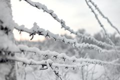 Barbed wire and snow stock image
