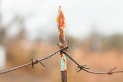 Free Barbed Wire With Metal Pin Stock Photo - 211794920
