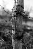 Barbed Wire on Wood Post. Background Royalty Free Stock Images