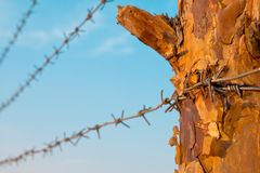 Barbed wire on a wooden post Stock Image