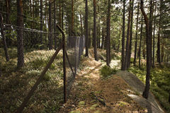 Barbed wired fence Stock Image