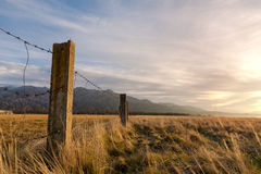 Barbed wired fence on pasture Stock Image