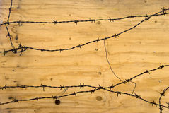 Barbed wires Stock Photography
