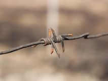 Barbed wires Stock Photos