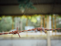 Barbed wires. Brown barbed wires. close up Stock Photography