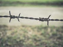 Barbed wires. Stock Images