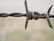 Barbed wires. Vintage barbed wires. close up Stock Images