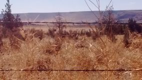 Barbed wore boundries. Cattle roam desert prairie pastures Royalty Free Stock Photography